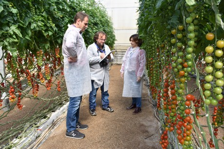 Love Tomato Event 2018 - Hortidaily
