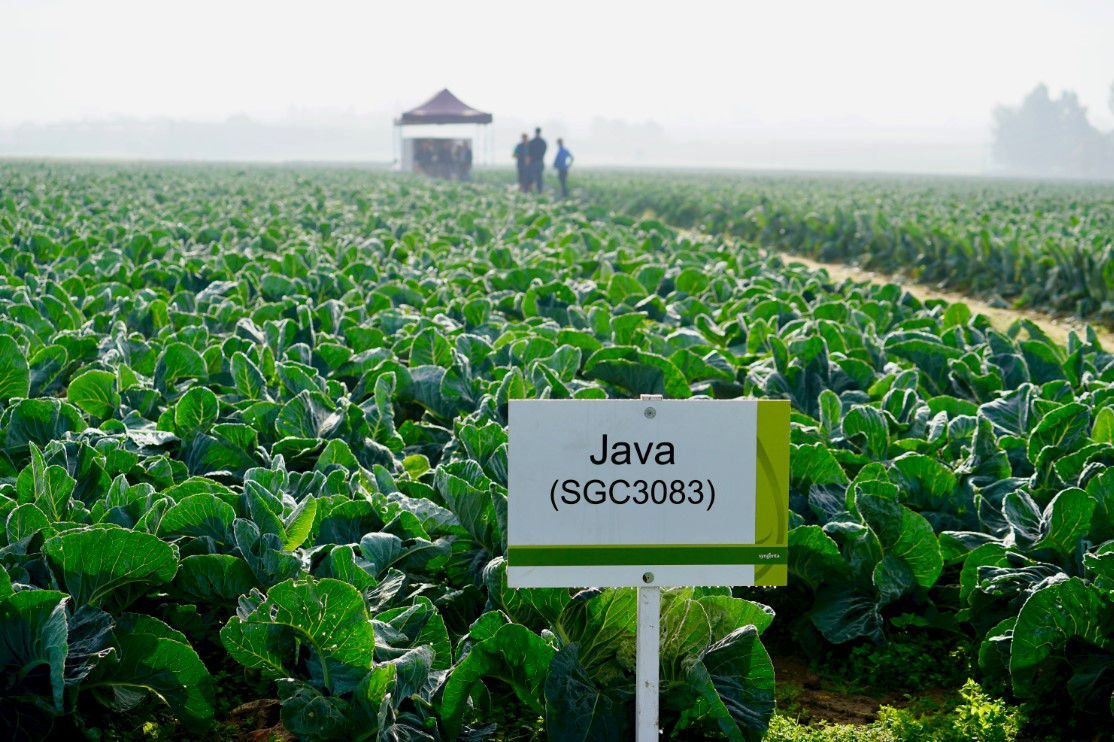 Syngenta - Java open dag