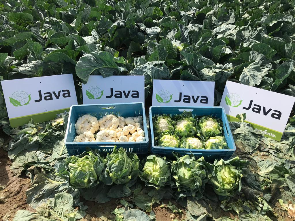 Open dag JAVA septmeber 2019