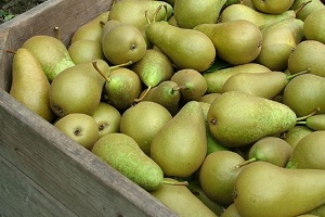 Conference peren in fruitkist